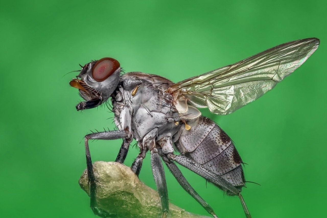 De meest bizarre weetjes over insecten
