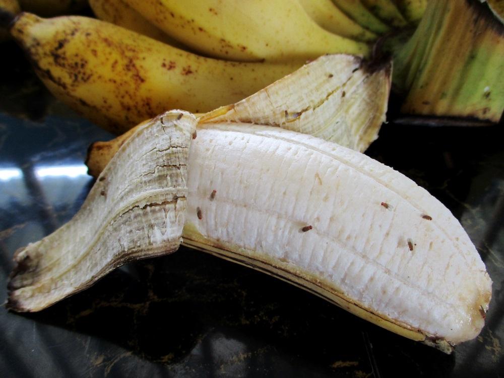 fruit op tijd op