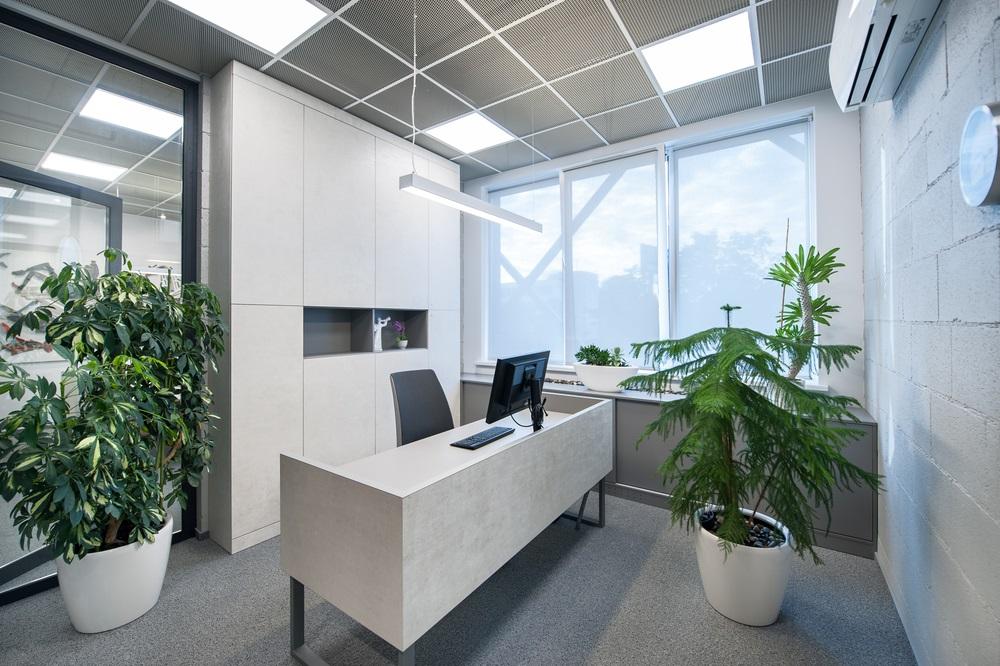 Luchtzuiverende kantoorplanten