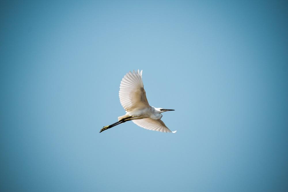 Top 10 snelste vogels ter wereld
