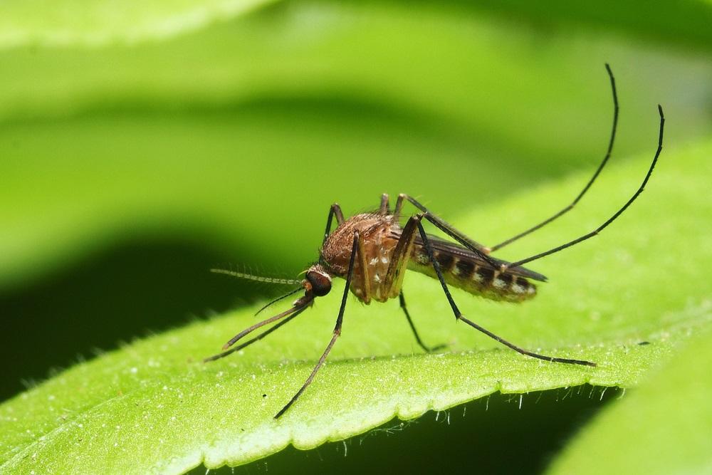 Weetjes over muggen