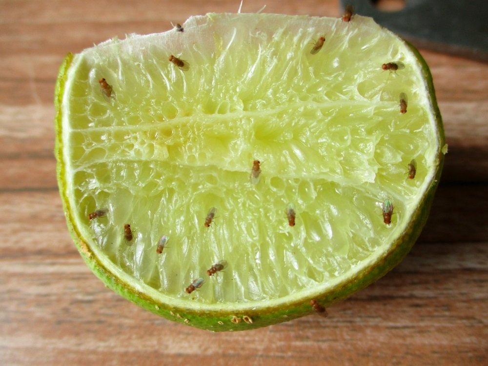 7 simpele trucjes om van fruitvliegje af te komen